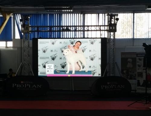 Enya-Expo Cluj 2015