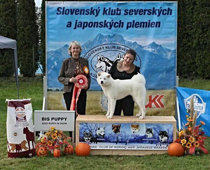slovenia 2014-bis puppy